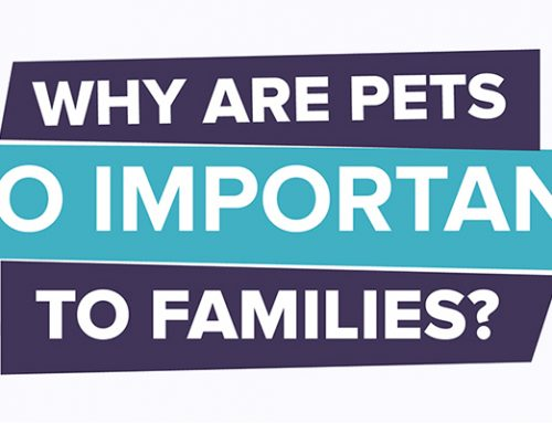 Why Are Pets So Important To Families