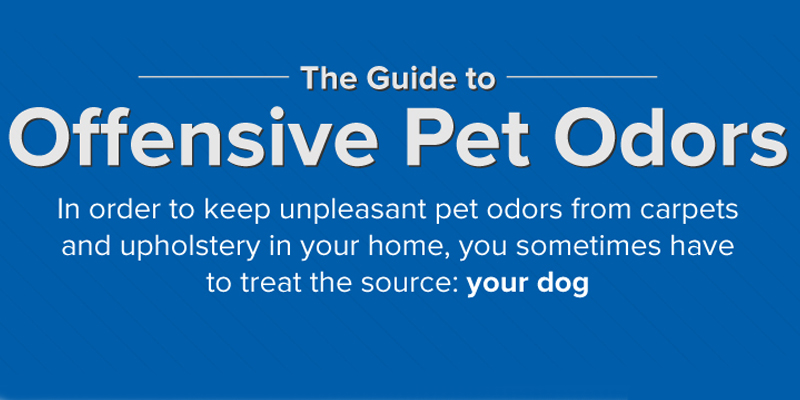 Guide to Offensive Pet Odors